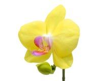 Bunte purpurrote Orchideeblumen Stockfotografie