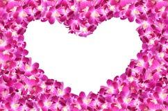 Bunte purpurrote Orchideeblumen stockbilder