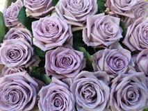 Bunte purpurrote Rosen mit reizenden Blumen Lizenzfreies Stockbild