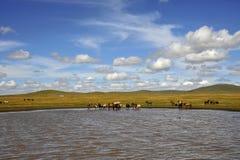 Bunte Ranch Stockfotografie