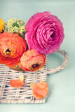 Bunte Ranunculusblume auf einem Abtropfbrett Stockfotografie