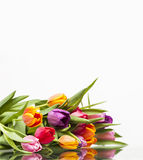 Bunte Rosen Stockfotos