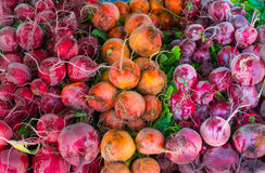 Bunte rote Rüben am Markt des Hollywood-Landwirts Lizenzfreie Stockfotos
