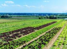 Bunte Salatfelder Stockfotos