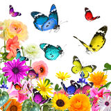Bunte schöne Blumen und Schmetterlinge Lokalisiert auf Weiß Stockfotografie