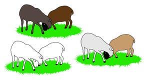 Bunte Schafe Stockfoto
