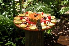 Bunte Schmetterlinge, die Früchte essen lizenzfreie stockfotografie