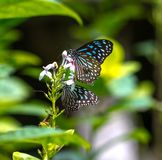 Bunte Schmetterlinge in einem Schmetterlingspark Lizenzfreie Stockbilder