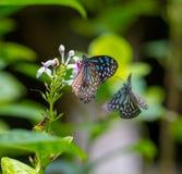Bunte Schmetterlinge in einem Schmetterlingspark Stockbilder