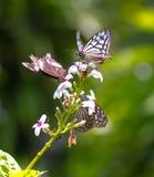Bunte Schmetterlinge in einem Schmetterlingspark Stockbild