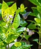 Bunte Schmetterlinge in einem Schmetterlingspark Lizenzfreie Stockfotografie