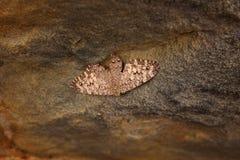 Bunte Schmetterlinge von Brasilien Stockbild