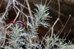 Bunte Schmetterlinge von Brasilien Stockfotos