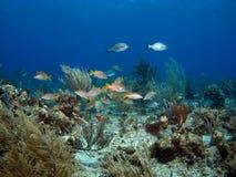 Bunte Schule der Fische Stockbild