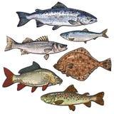 Bunte Seefischskizzen-Artsammlung lokalisiert auf weißem Hintergrund Stockbilder
