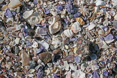 Bunte Shells Stockfotos