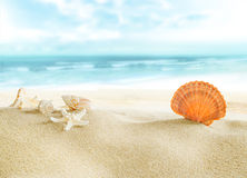 Bunte Shells auf dem Strand Stockfoto
