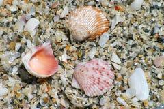 Bunte Shells auf Strand Lizenzfreie Stockfotos
