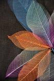 Bunte Skelett-Blätter in der Blumen-Form lizenzfreies stockbild