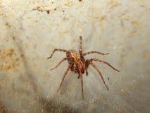 Bunte Spinnennahaufnahme Lizenzfreie Stockbilder