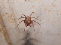Bunte Spinnennahaufnahme Stockfotografie