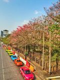 Bunte Stadt mit Tabebuia und buntes Taxi lizenzfreies stockbild