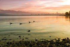 Bunte Stadt-Skyline mit den schwimmenden Gänsen Lizenzfreies Stockfoto