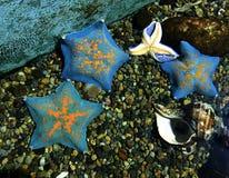 Bunte Sternfische am Aquarium Lizenzfreies Stockfoto