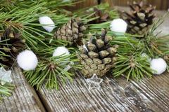 Bunte Tannenbaumspielwaren, Kiefernkegel, Koniferenniederlassungen auf Woode Lizenzfreies Stockbild
