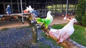 Bunte Tauben und Papagei im Zoo Lizenzfreie Stockfotos