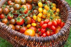 Bunte Tomaten Lizenzfreies Stockfoto