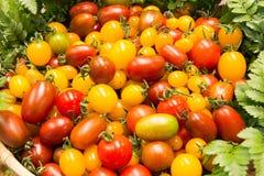 bunte Tomaten, rote Tomaten, gelbe Tomaten, Rot und Gelb Lizenzfreie Stockbilder