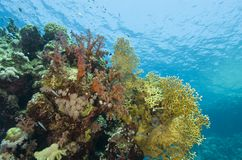 Bunte tropische korallenrote Szene im seichten Wasser. Stockbilder