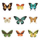 Bunte tropische Schmetterlingssammlung Stockbilder