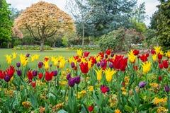 Bunte Tulip Flowes und Bäume im Kanonen-Hügel-Park Lizenzfreie Stockbilder