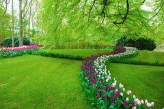 Bunte Tulpe blüht im Frühjahr Lizenzfreie Stockbilder