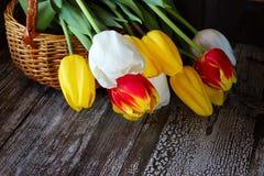 Bunte Tulpen in einem Korb auf einem hölzernen Hintergrund Lizenzfreie Stockfotos