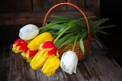 Bunte Tulpen in einem Korb auf einem hölzernen Hintergrund Stockfotos