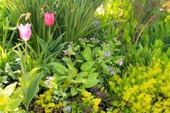 Bunte Tulpen innerhalb einer sch?nen Landschaft in New-Jersey stockfotografie