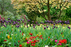 Bunte Tulpen am Kanonen-Hügel-Park Stockbilder