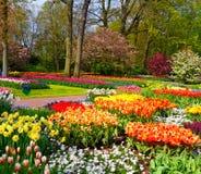 Bunte Tulpen in Keukenhof Lizenzfreies Stockfoto