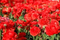 Bunte Tulpen und bunte Blumen Stockfotografie