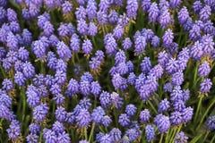 Bunte Tulpen und bunte Blumen Stockbilder