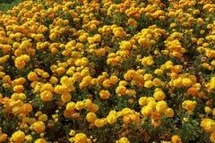 Bunte Tulpen und bunte Blumen Stockbild
