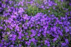 Bunte Tulpen und bunte Blumen Lizenzfreies Stockfoto