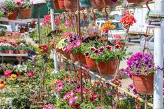 Bunte Tulpen und bunte Blumen Stockfotos