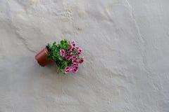 Bunte Tulpen und bunte Blumen Stockfoto