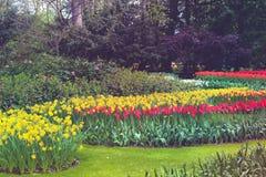Bunte Tulpen und Blumen in den Bäumen Lizenzfreies Stockbild