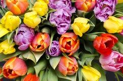 Bunte Tulpen von der Spitze Stockfotos