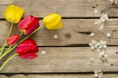 Bunte Tulpenblumen und Kirschblüte auf altem Holztisch Stockbilder